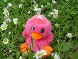 Pipi auf der Blumenwiese